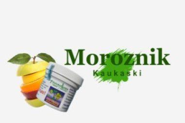 Moroźnik kaukaski – roślina lecznicza